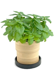 Potting Shed Creations Bamboo Grow Pot - Front full body