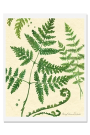 Sally Eckman Roberts Ferns Art Print A-Natural - Product Mini Image