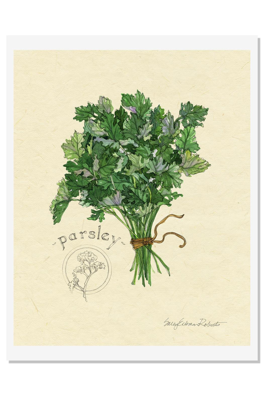 Sally Eckman Roberts Herbs Print-Parsley - Main Image
