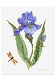 Sally Eckman Roberts Iris Botanical Print - Product Mini Image