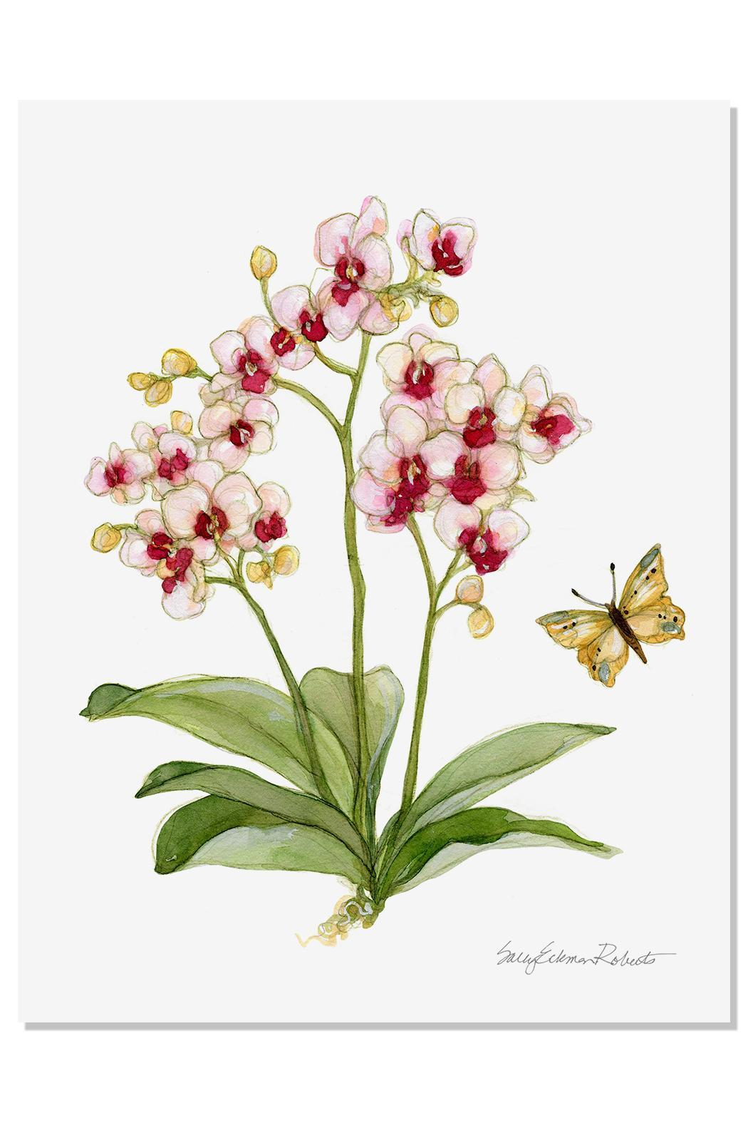 Sally Eckman Roberts Orchid Botanical Print - Front Cropped Image