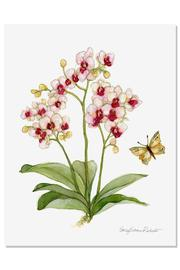 Sally Eckman Roberts Orchid Botanical Print - Product Mini Image