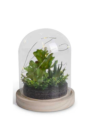 Maison A Small LED Succulent Terrarium - Product Mini Image