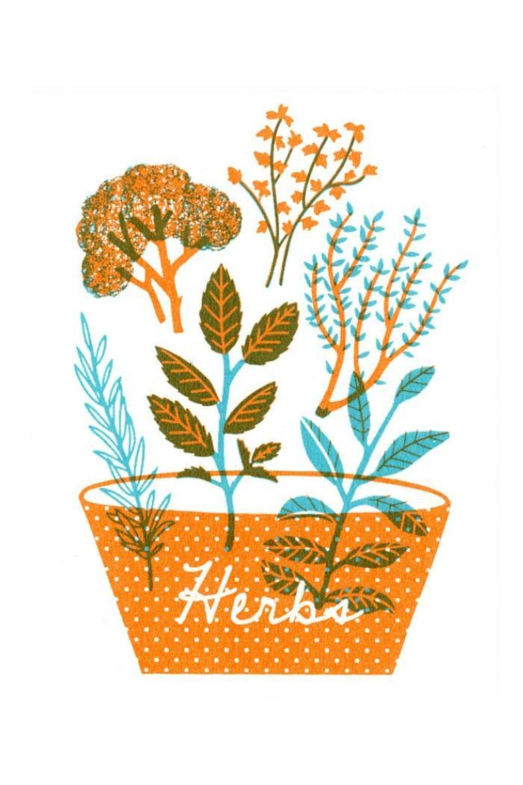 The Seapink Herbs Art Print - Front Cropped Image
