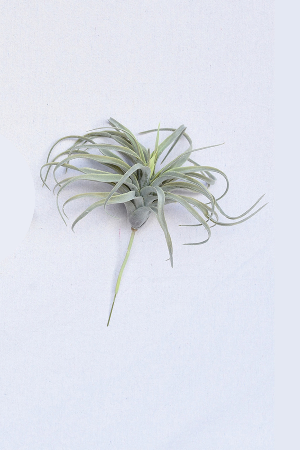 Homart Tilandsia Faux Air Plant - Side Cropped Image