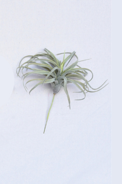 Homart Tilandsia Faux Air Plant - Alternate List Image