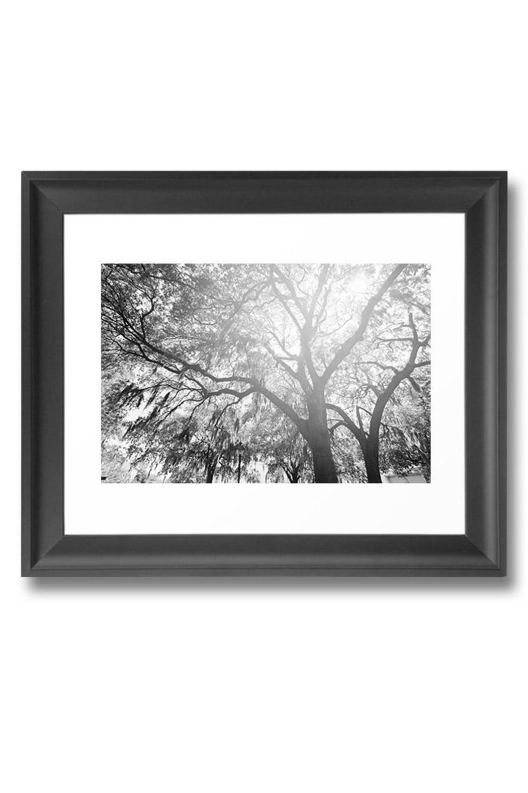 Urban Sassafras Limited Edition Print - Front Full Image