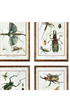 Uttermost Natural History Insects - Alternate List Image