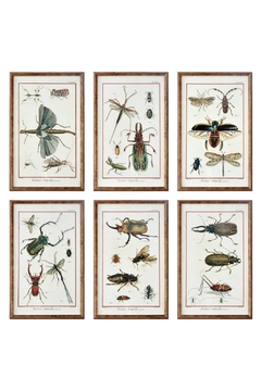 Shoptiques Product: Natural History Insects