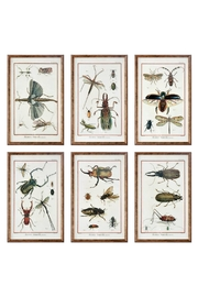 Uttermost Natural History Insects - Product Mini Image