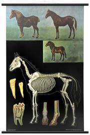 Wallography Horse Chart - Product Mini Image