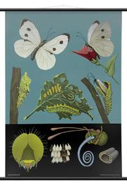 Wallography White Butterfly Chart - Product Mini Image