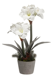All State Floral White Potted Amaryllis - Product Mini Image