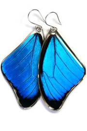 Wingstitution Blue Morpho Earrings - Front cropped
