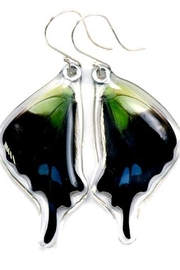 Wingstitution Purplespotted Swallowtail Earrings - Front cropped