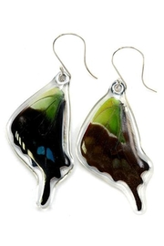Wingstitution Purplespotted Swallowtail Earrings - Front full body