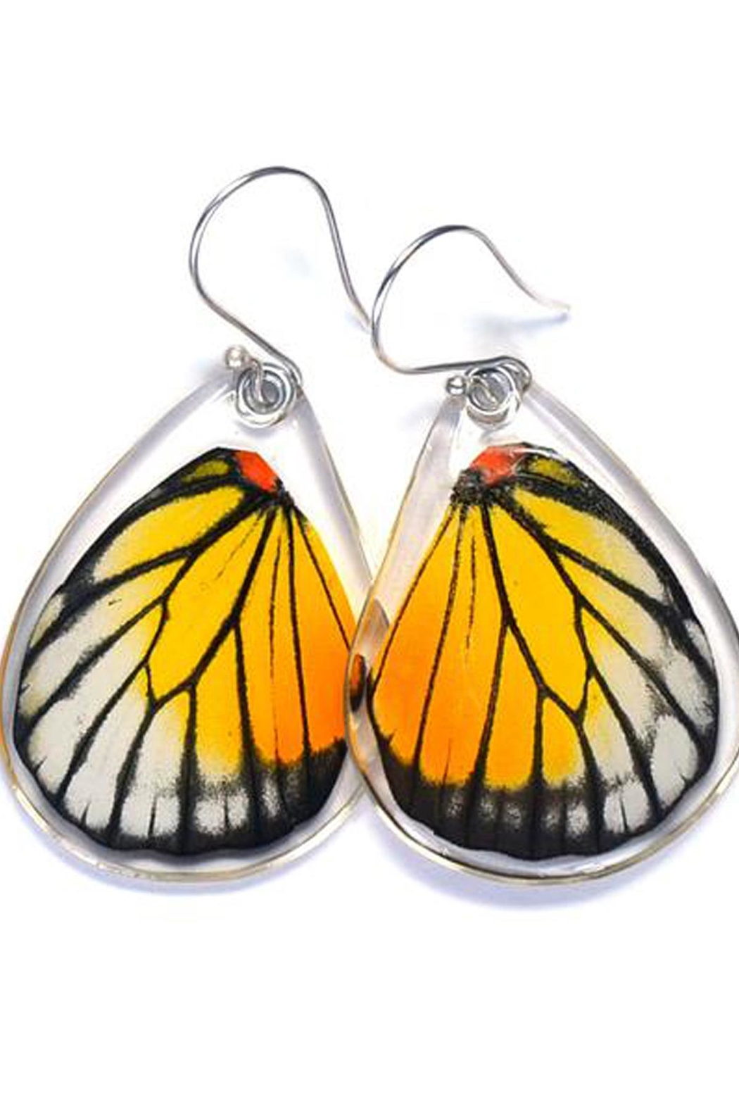 Wingstitution Redspot Butterfly Earrings - Front Cropped Image